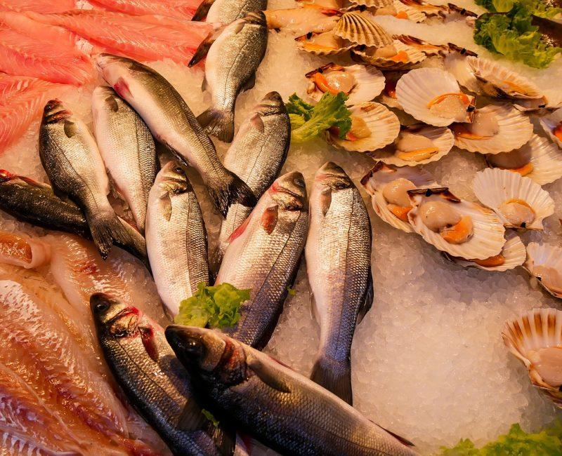 ryby e-piotripawel